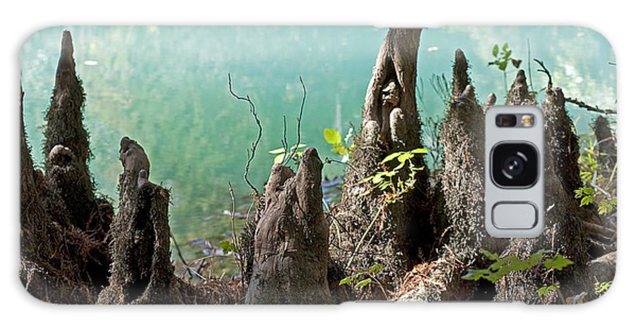 Nature Galaxy S8 Case featuring the photograph Cypress Knees In The Mist by Kenneth Albin