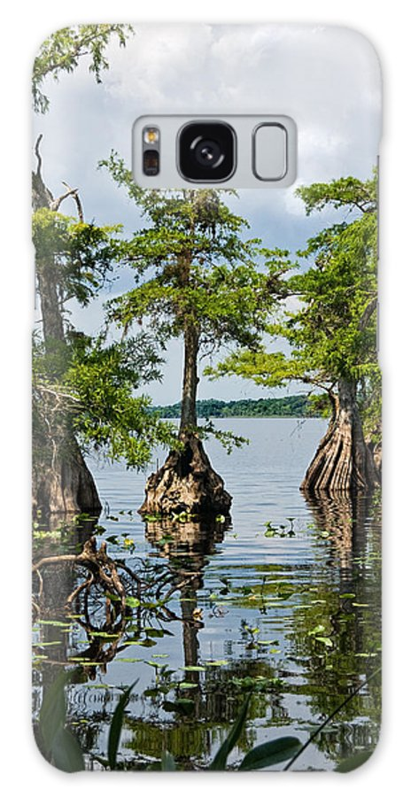 Trees Galaxy Case featuring the photograph Cypress Reflections by Christopher Holmes