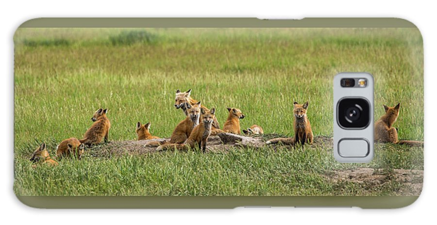 Daddy Fox Galaxy S8 Case featuring the photograph Daddy's Foxy Daycare by Yeates Photography