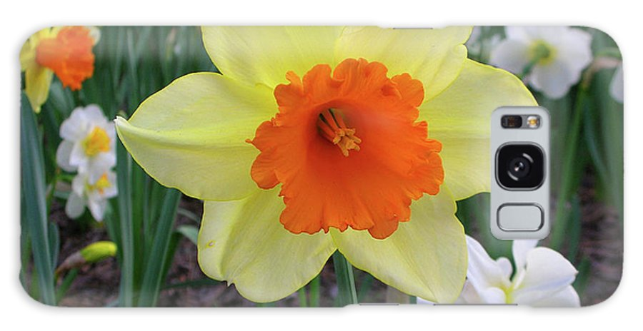 Flowers Galaxy S8 Case featuring the photograph Daffodil 0796 by Guy Whiteley
