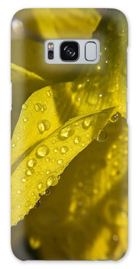 Daffodil Galaxy S8 Case featuring the photograph Daffodil Dew by Teresa Mucha