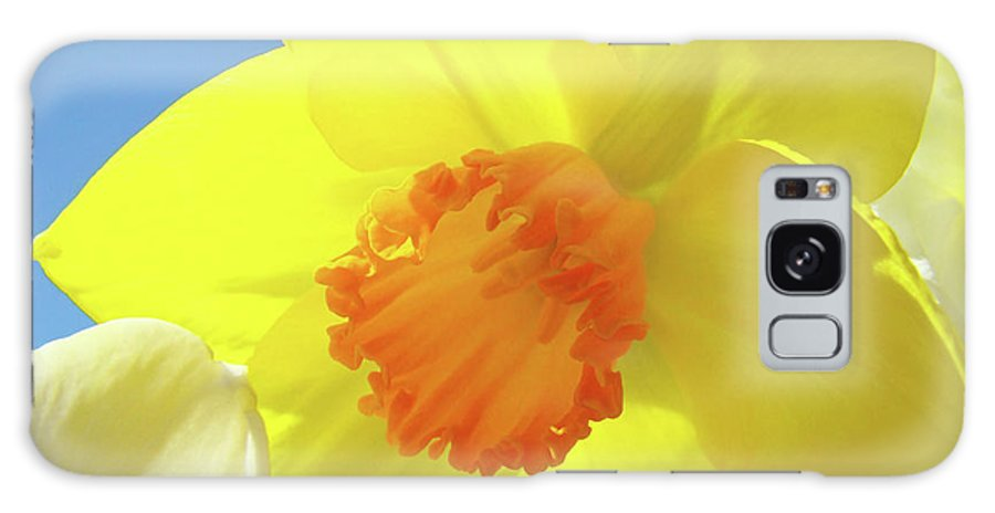 �daffodils Artwork� Galaxy Case featuring the photograph Daffodil Flowers Artwork 18 Spring Daffodils Art Prints Floral Artwork by Baslee Troutman