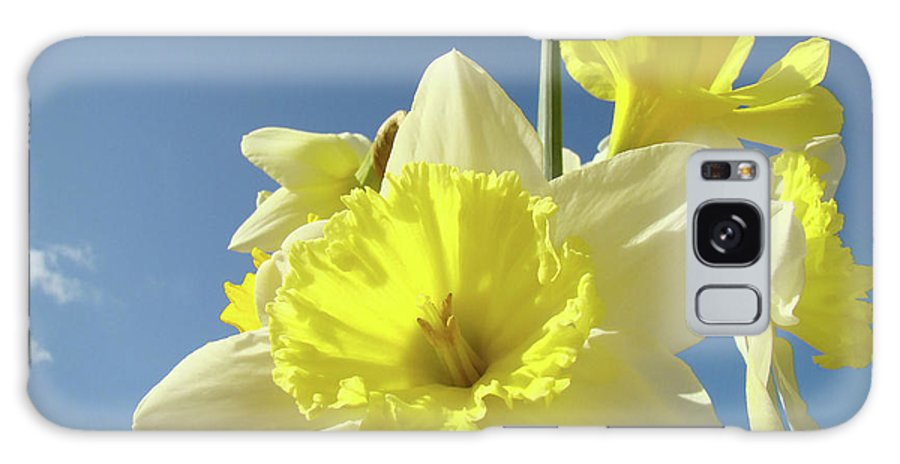 �daffodils Artwork� Galaxy Case featuring the photograph Daffodil Flowers Artwork Floral Photography Spring Flower Art Prints by Baslee Troutman