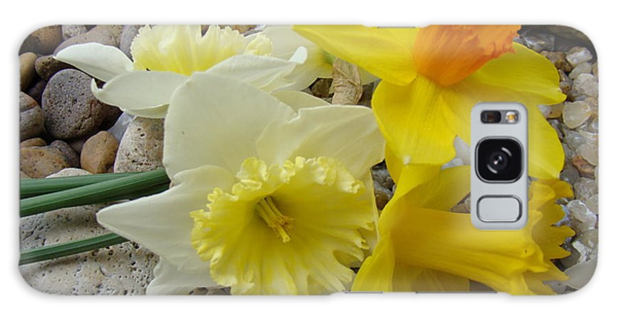 �daffodils Artwork� Galaxy Case featuring the photograph Daffodils Flower Artwork 29 Daffodil Flowers Agate Rock Garden Floral Art Prints by Baslee Troutman