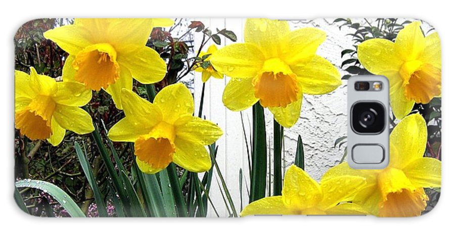 Daffodils Galaxy S8 Case featuring the photograph Daffodils by Will Borden
