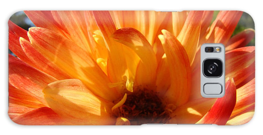 Dahlia Galaxy S8 Case featuring the photograph Dahlia Floral Orange Yellow Flower Botanical Art Prints Canvas Baslee Troutman by Baslee Troutman