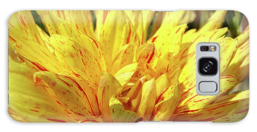 Dahlia Galaxy S8 Case featuring the photograph Dahlia Flower Art Collection Giclee Prints Baslee Troutman by Baslee Troutman