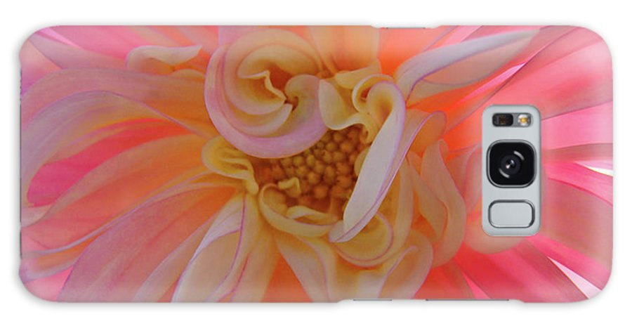 Dahlia Galaxy S8 Case featuring the photograph Dahlia Flower Sunlit Pink White Dahlia Garden Floral by Baslee Troutman