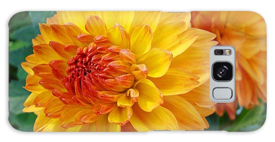 Dahlia Galaxy S8 Case featuring the photograph Dahlias Art Prints Orange Dahlia Flowers Baslee Troutman by Baslee Troutman