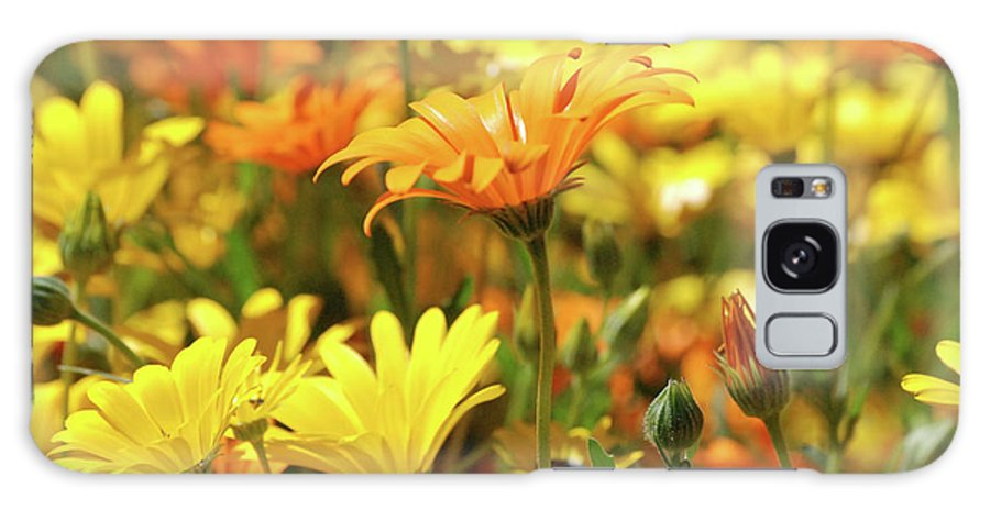 Daisies Galaxy S8 Case featuring the photograph Daisies by AJ Harlan