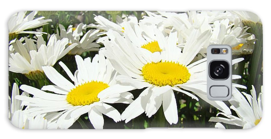 Daisy Galaxy S8 Case featuring the photograph Daisies Floral Landscape Art Prints Daisy Flowers Baslee Troutman by Baslee Troutman