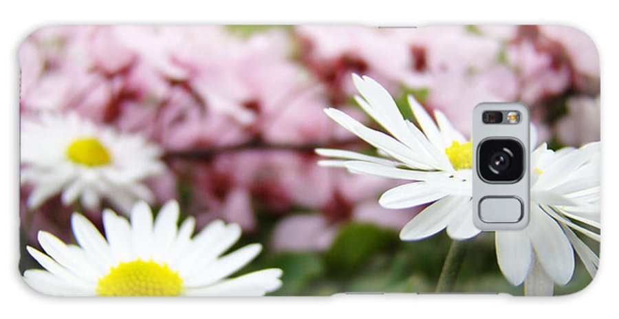 Daisies Galaxy S8 Case featuring the photograph Daisies Flowers Art Prints Spring Flowers Artwork Garden Nature Art by Baslee Troutman