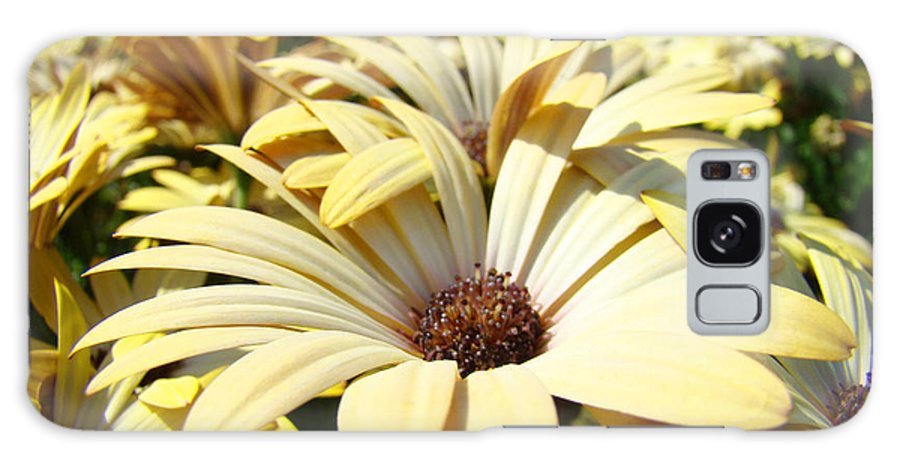 Daisy Galaxy S8 Case featuring the photograph Daisies Flowers Landscape Art Prints Daisy Floral Baslee Troutman by Baslee Troutman