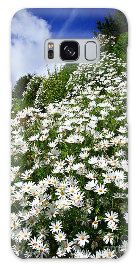 Countryside Galaxy Case featuring the photograph Daisies by Gaspar Avila