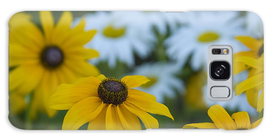 Daisy Galaxy S8 Case featuring the photograph Daisies by Idaho Scenic Images Linda Lantzy