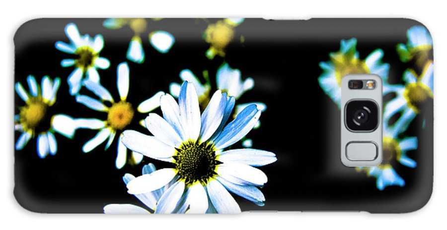 Daisies Galaxy S8 Case featuring the photograph Daisies by Grebo Gray