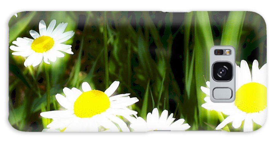 Daisies Galaxy S8 Case featuring the photograph Daisy Dream by Idaho Scenic Images Linda Lantzy