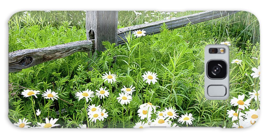 Brooklin Galaxy S8 Case featuring the photograph Daisy Fence by Susan Cole Kelly