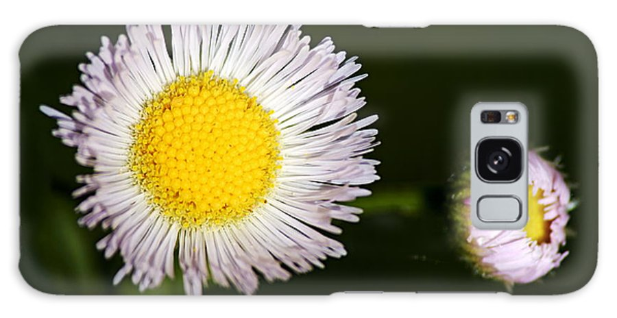 Fleabane Galaxy S8 Case featuring the photograph Daisy Fleabane 2 by Larry Ricker