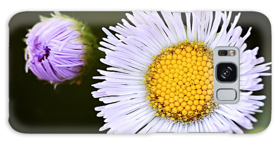 Fleabane Galaxy S8 Case featuring the photograph Daisy Fleabane 3 by Larry Ricker