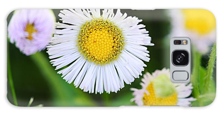 Fleabane Galaxy S8 Case featuring the photograph Daisy Fleabane by Larry Ricker