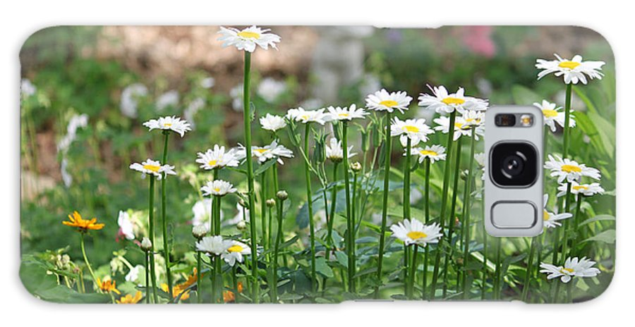 Daisy Galaxy S8 Case featuring the photograph Daisy Garden by Suzanne Gaff