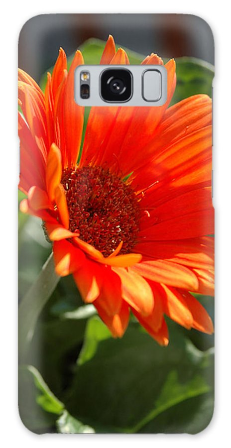 Daisy Galaxy S8 Case featuring the photograph Daisy by Kathy Schumann