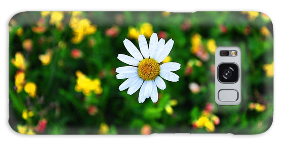 Daisy Galaxy S8 Case featuring the photograph Daisy by Noah Cole