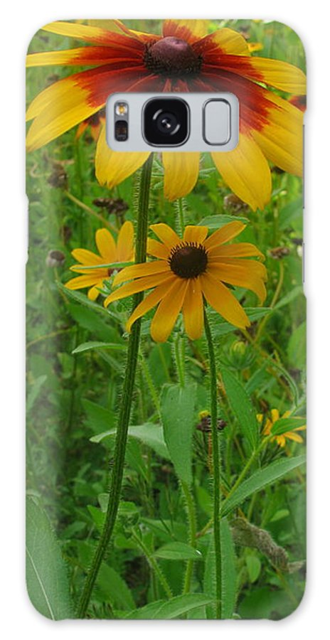 Daisy Galaxy S8 Case featuring the photograph Daisy by Tammy Bullard
