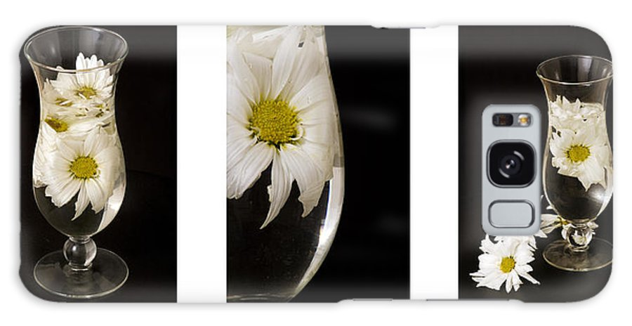 Flowers Galaxy S8 Case featuring the photograph Daisy Triptych by Ayesha Lakes