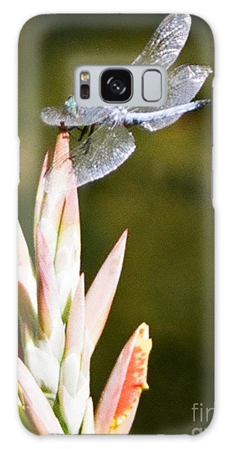 Dragonfly Galaxy S8 Case featuring the photograph Damselfly by Dean Triolo