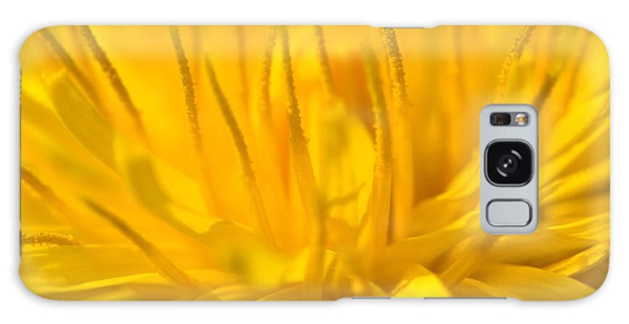 Dandelion Galaxy S8 Case featuring the photograph Dande 1 by Noah Cole