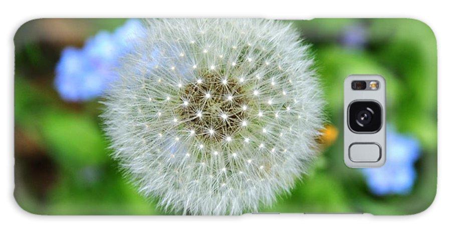 Flower Galaxy S8 Case featuring the photograph Dandelion 2 by Rich Bodane