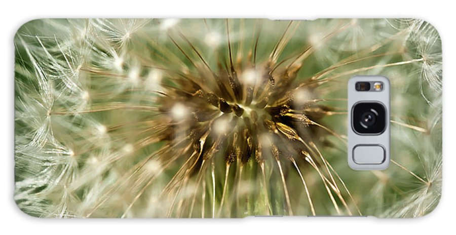Dandelion Galaxy S8 Case featuring the photograph Dandelion Seed Head by Onyonet Photo Studios
