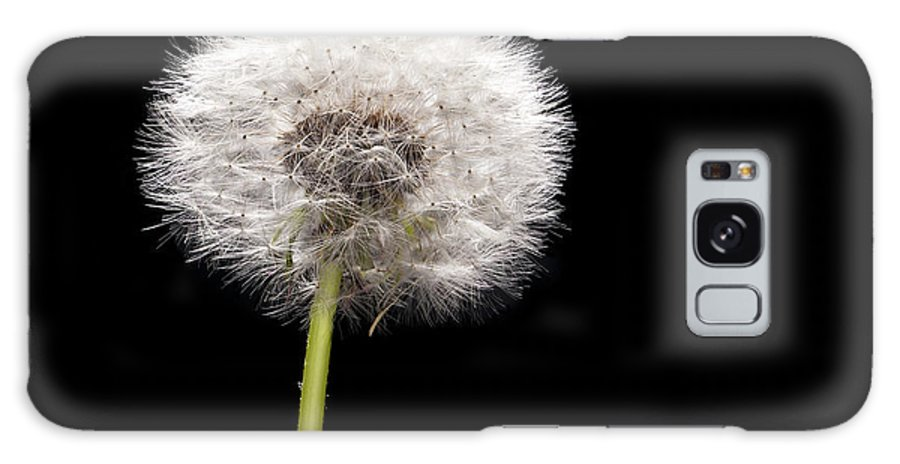 Weed Galaxy S8 Case featuring the photograph Dandelion Seedhead by Steve Gadomski