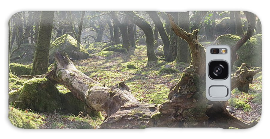 Dartmoor Galaxy S8 Case featuring the photograph Dartmoor Woods by Linda Whitaker