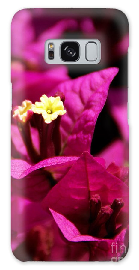 Bougainvillea Galaxy S8 Case featuring the photograph Deep Desire by Linda Shafer