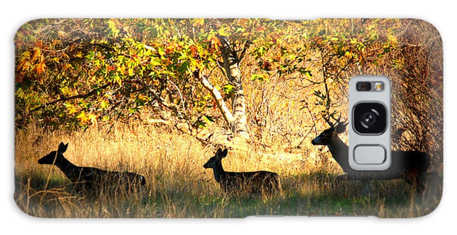 Landscape Galaxy S8 Case featuring the photograph Deer Family In Sycamore Park by Carol Groenen
