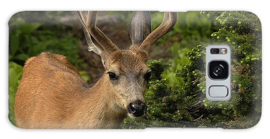 Deer Galaxy S8 Case featuring the photograph Deer II by Keith Lovejoy