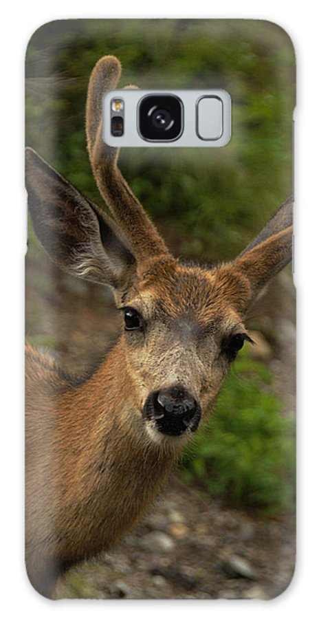 Deer Galaxy S8 Case featuring the photograph Deer IIi by Keith Lovejoy