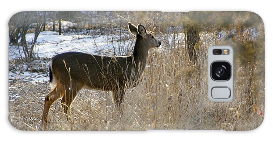 Deer Galaxy Case featuring the photograph Deer in Morning light by Toni Berry