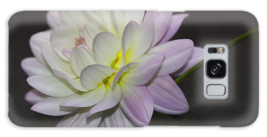 Flower Galaxy S8 Case featuring the photograph Delicate Dahlia Balance by Deborah Benoit