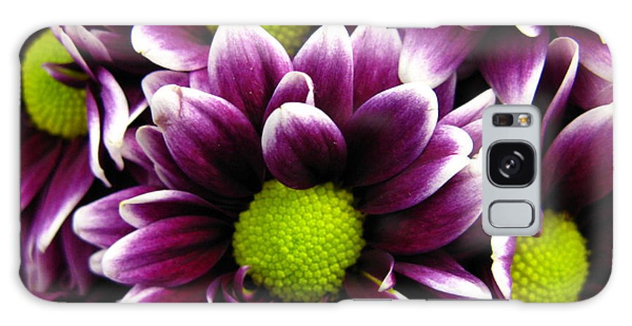 Purple Galaxy S8 Case featuring the photograph Delicate Purple by Rhonda Barrett