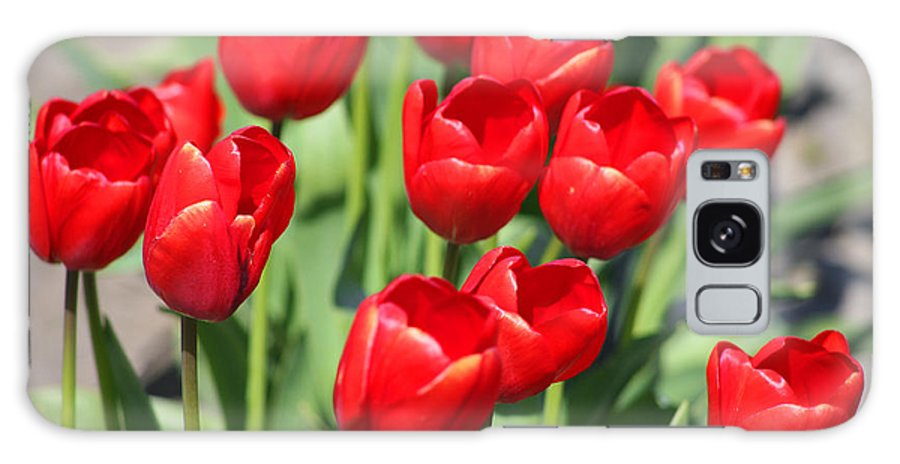 Red Tulips Galaxy Case featuring the photograph Delicious Tulips by Mary Gaines