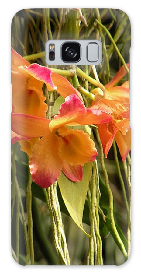 Orchids Galaxy S8 Case featuring the photograph Dendrobium Orchids by Rosalie Scanlon