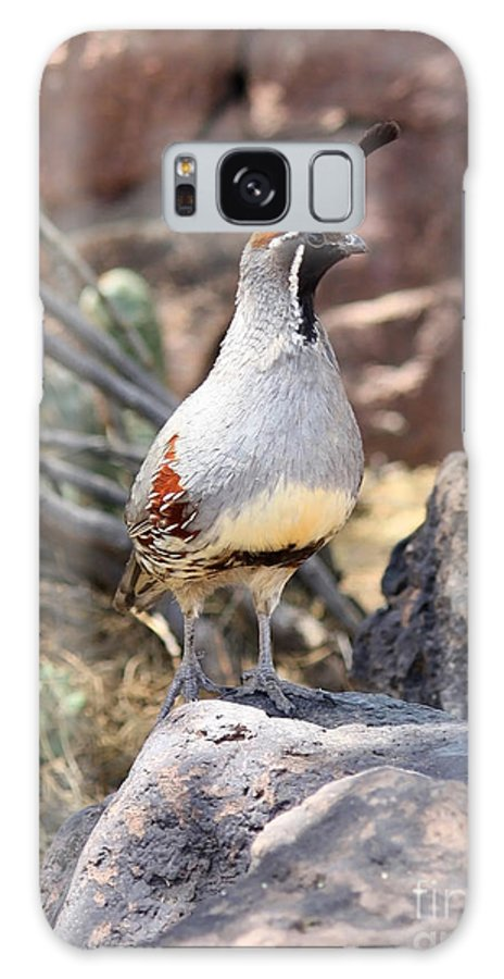 Bird Galaxy S8 Case featuring the photograph Desert Quail by Carol Groenen
