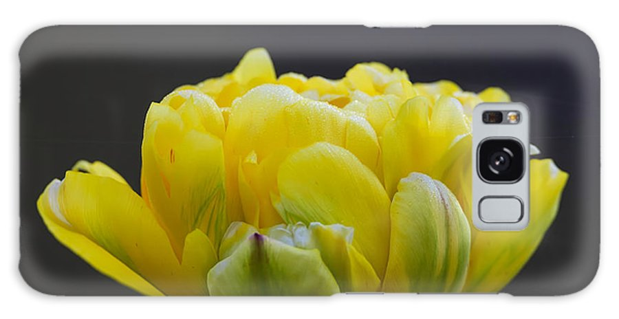 500px Galaxy S8 Case featuring the photograph Dew Covered Yellow Tulip by Steve Samples