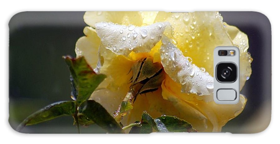 Flower Galaxy S8 Case featuring the photograph Dewy Yellow Rose 1 by Amy Fose