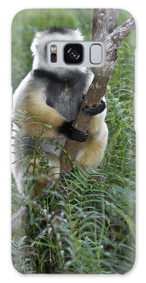 Madagascar Galaxy S8 Case featuring the photograph Diademed Sifaka by Michele Burgess