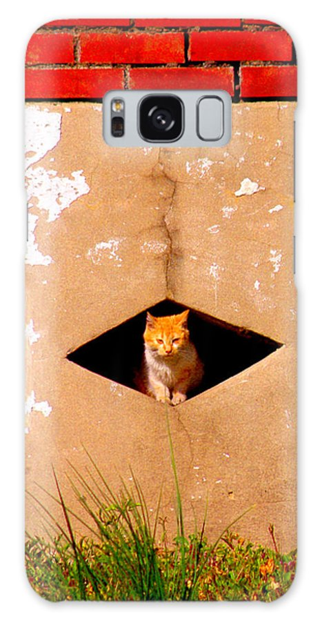 Cat Galaxy S8 Case featuring the photograph Diamond Kitty by Albert Stewart